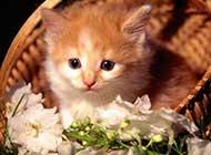 可爱淘气的猫咪高清组图