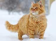 萌宠团高清可爱动物图片