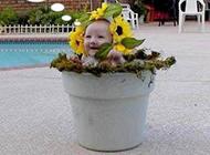 花盆里长出来的可爱宝宝
