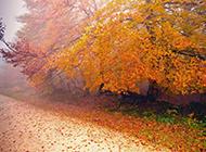 秋天的枫树林唯美风景图片