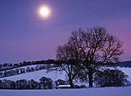 冬季月色迷离唯美图片