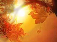 秋日唯美清新森林梦幻风景壁纸