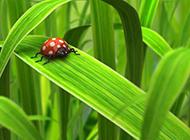 养眼绿色植物精美壁纸欣赏