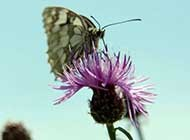 轻盈敏捷的蝴蝶特写高清图集
