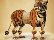 老虎的性感露脐装