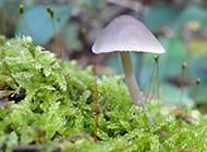 清新小蘑菇高清摄影