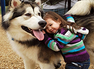 小孩伴侣西伯利亚雪橇犬图片