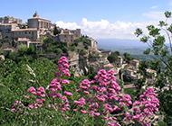 法国普罗旺斯薰衣草庄园唯美风景图片