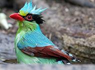 漂亮鸟类图片斑斓迷人