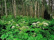 笔直挺拔的树木植被风景图片