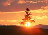 黄昏晚霞瑰丽与树木高清组图