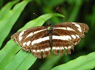 蝴蝶与蜻蜓翩然起舞高清壁纸