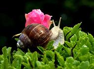珍贵的白玉蜗牛图片
