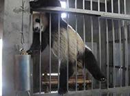 动物爆笑图片之功夫熊猫越狱啦