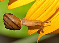 蜻蜓蜗牛细小昆虫动物图片