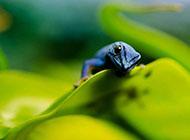 大自然可爱小动物图集
