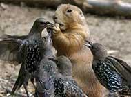最萌动物 觅食的鸟儿