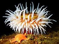 海底世界集群海葵动物图片