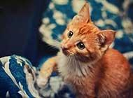 可爱小猫咪草原清新写真美图