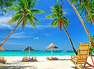 夏威夷椰林唯美风景壁纸