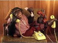 日理万机的大猩猩