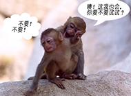 猴子夫妻的那点事