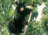 凶猛野生动物狗熊图片