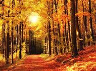 秋天美轮美奂树林风景图片