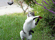 爆笑动物搞笑趣图之猫和老鼠