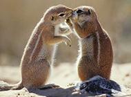 甜蜜有爱的动物情侣图片大全高清壁纸