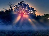 朦胧云雾中的树林高清风景图片