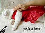 动物搞笑集锦之猫咪女主