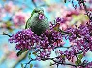 羽毛丰满的小鸟高清桌面壁纸