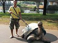 乌龟搞笑雷人图片之看哥的神兽
