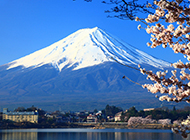 樱花富士山美景图片优美清澈