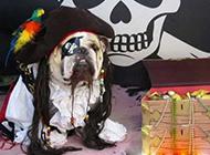 """狗狗爆笑头像之加勒比""""海盗"""""""