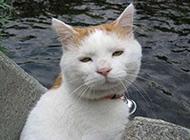 猫咪搞怪囧图表情之坑爹啊