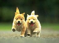 携手奔向幸福的小狗
