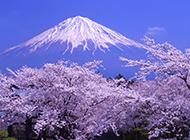日本富士山春天美景清新怡人