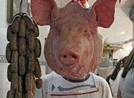 毫无违和感的猪头爆笑图片