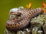 可怕的毒蛇高清摄影图片大全