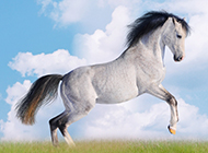 奔跑的骏马高清写真