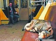 qq聊天搞笑吐槽图片之会坐地铁的狗