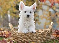 可爱超萌的狗狗高清摄影图片
