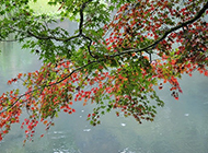 高清西湖雨中唯美摄影