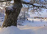 瑞典冬日雪景高清电脑壁纸