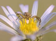 常见昆虫图片高清近距离特写
