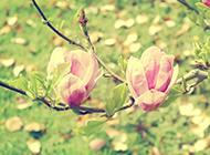 春天绿色唯美风景图片壁纸