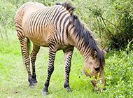 十大动物奇特杂交 动物们的特点