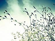 安静温馨意境风景摄影壁纸